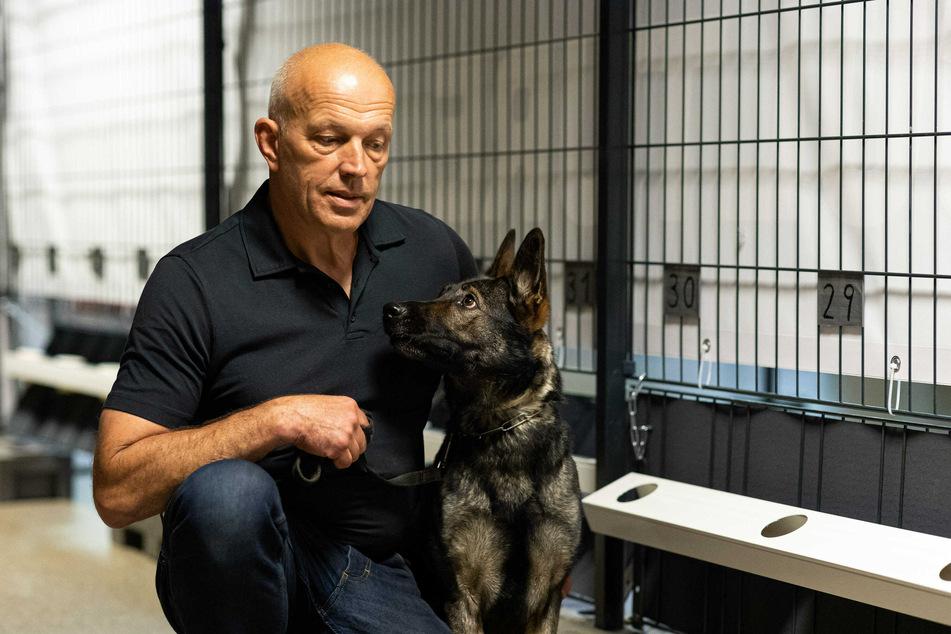 Hundeführer Hans Ebbers und seine Corona-Spürhundin Bea (Deutscher Schäferhund) in der Teststation in Hannover.