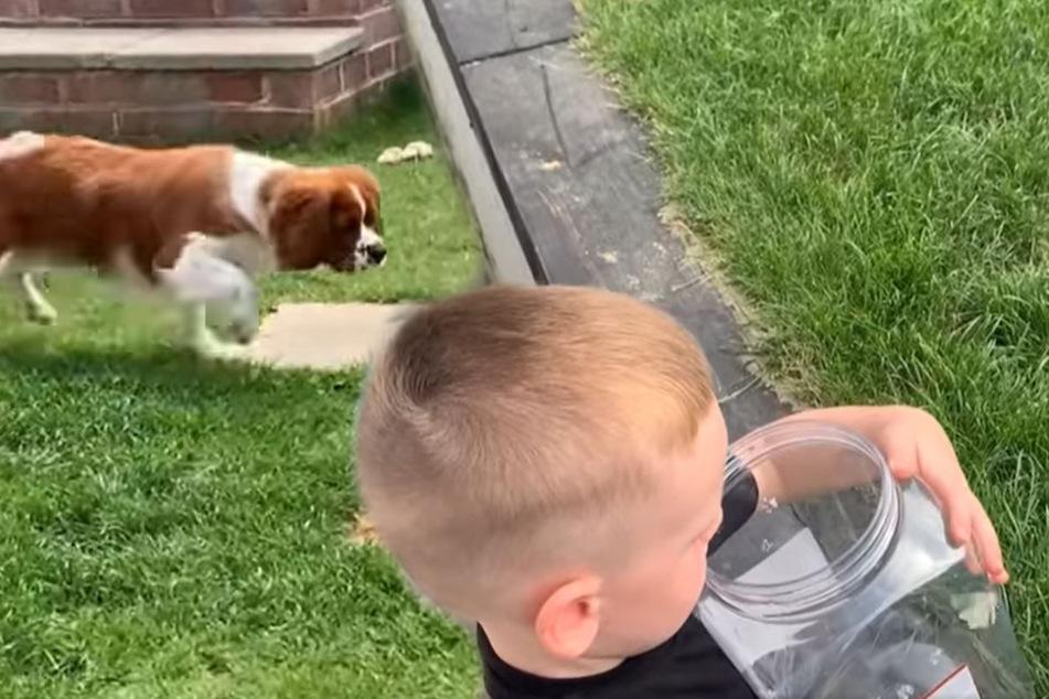 Kleiner Junge lässt Schmetterling frei: Die Reaktion seines Hundes ist bitter