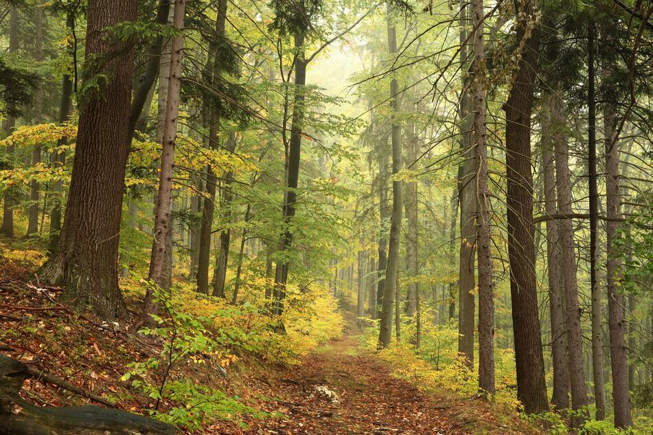 Der Jäger fand die Leiche in einem Waldgebiet. (Symbolbild)