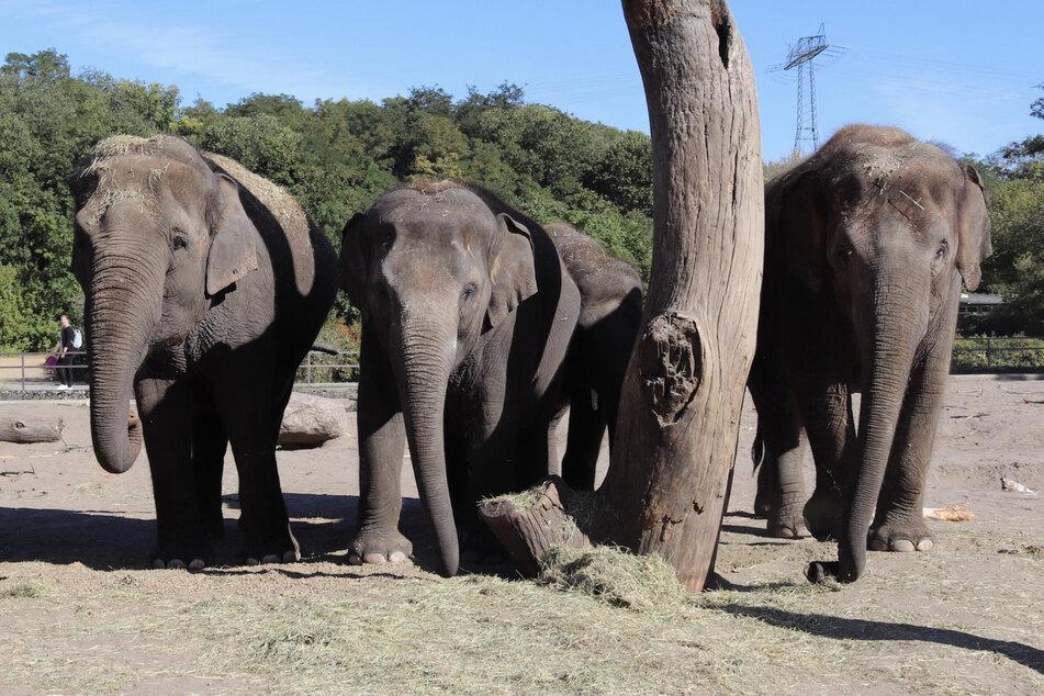 Von links nach rechts: Astra (40), Pantha (8), Edgar (4, im Hintergrund) und Thuza (11).