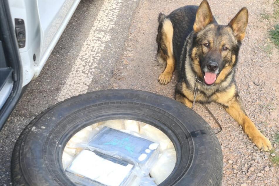 Hund Quincy überführt mutmaßlichen Drogenkurier