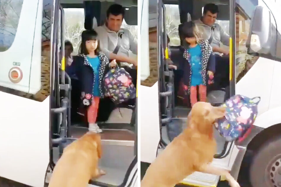 Schoolgirl gets a little help from her adorably dedicated dog