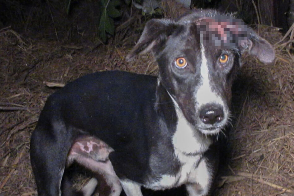 Close call: dog rescued before it was too late