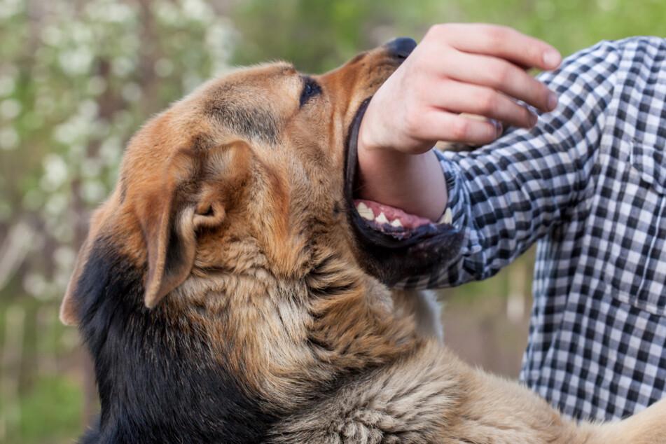 Freilaufende Hunde beißen auf Gassirunde zu