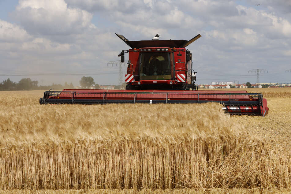 Die Getreideernte hat begonnen: Gerste ist als erstes an der Reihe.