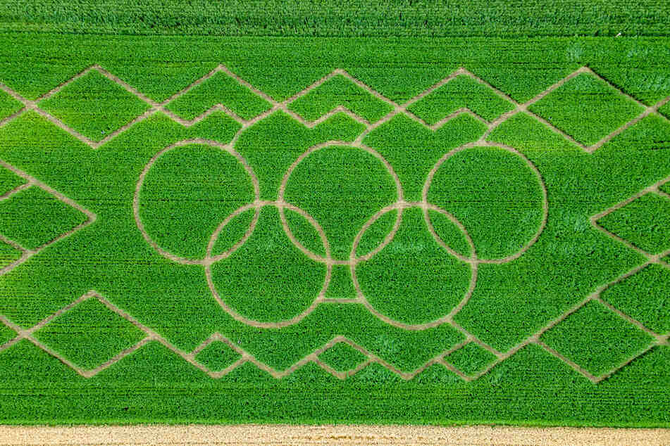 Die Olympischen Ringe sind im vier Hektar großen Maisfeld-Labyrinth am Ortsrand aus der Luft zu sehen.