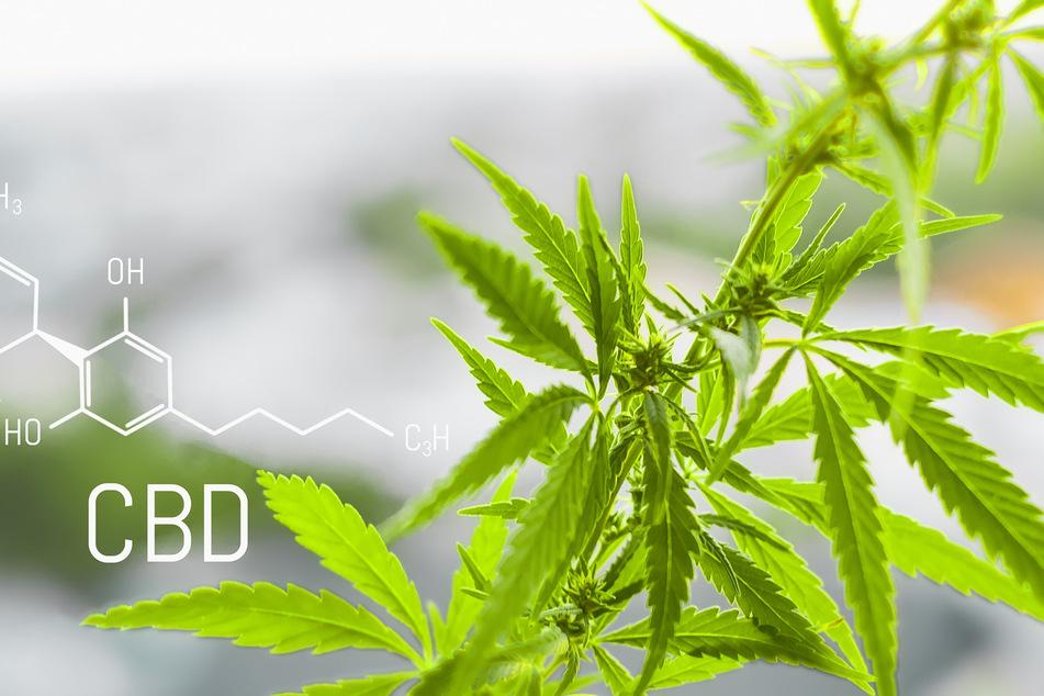 CBD hat im Gegensatz zu THC keinen berauschenden Effekt.
