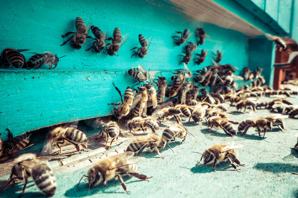Killer bees attack three people and kill one in Arizona