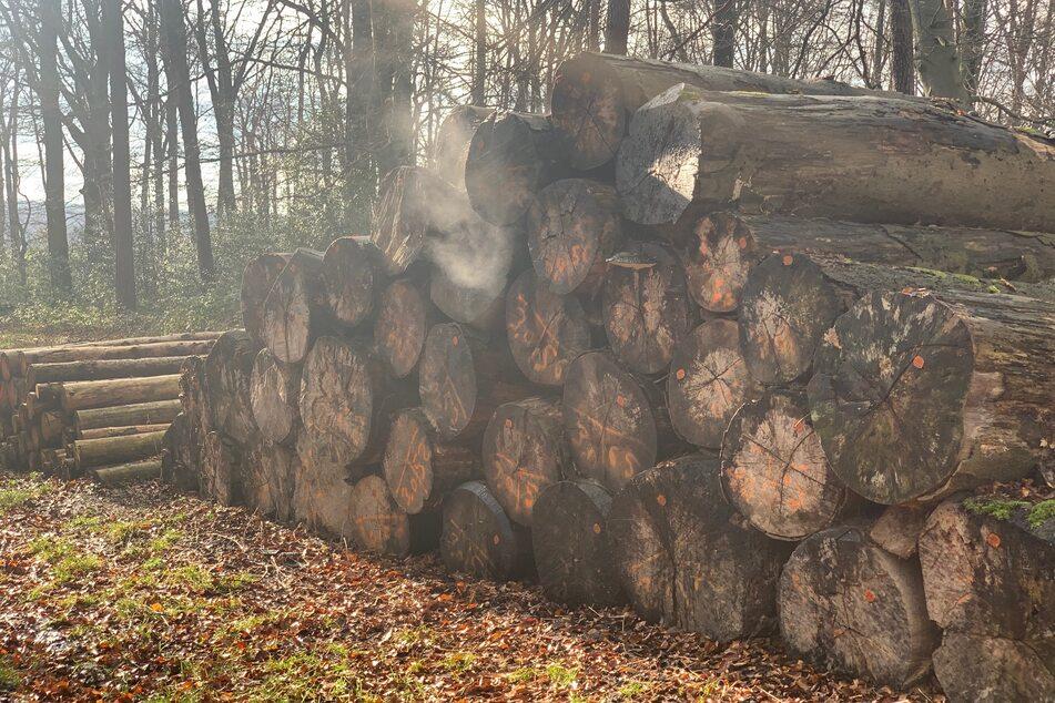 Vor Ort fanden die Feuerwehrleute einen brennenden Baumstamm-Stapel vor, der rasch gelöscht werden konnte.