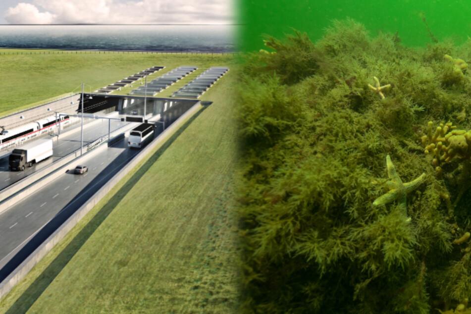 Verzögern unbekannte Riffe in der Ostsee den Bau des Fehmarnbelt-Tunnels?