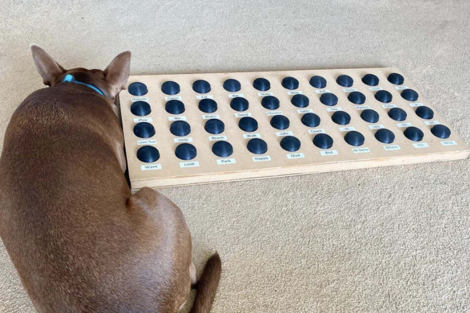 Look who's talking! Dog communicates with his owners through amazing device