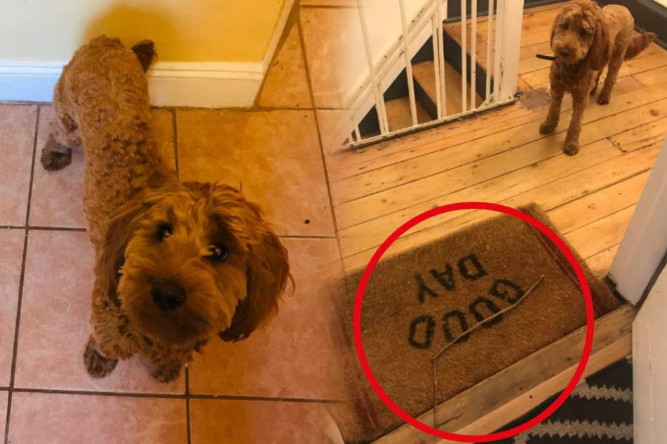 Allanna bekam unerwarteten Besuch vom Hund Freida. Immerhin: Dieser brachte ihr sogar ein Geschenk mit!