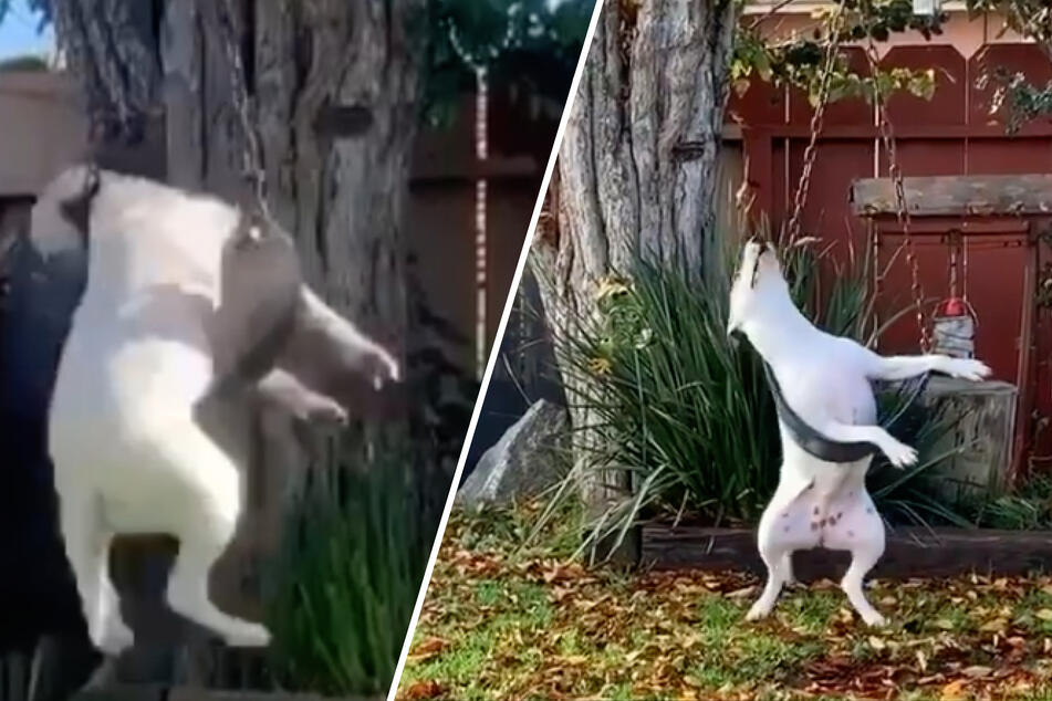 This dog makes everyone's day with her hilarious hobby!