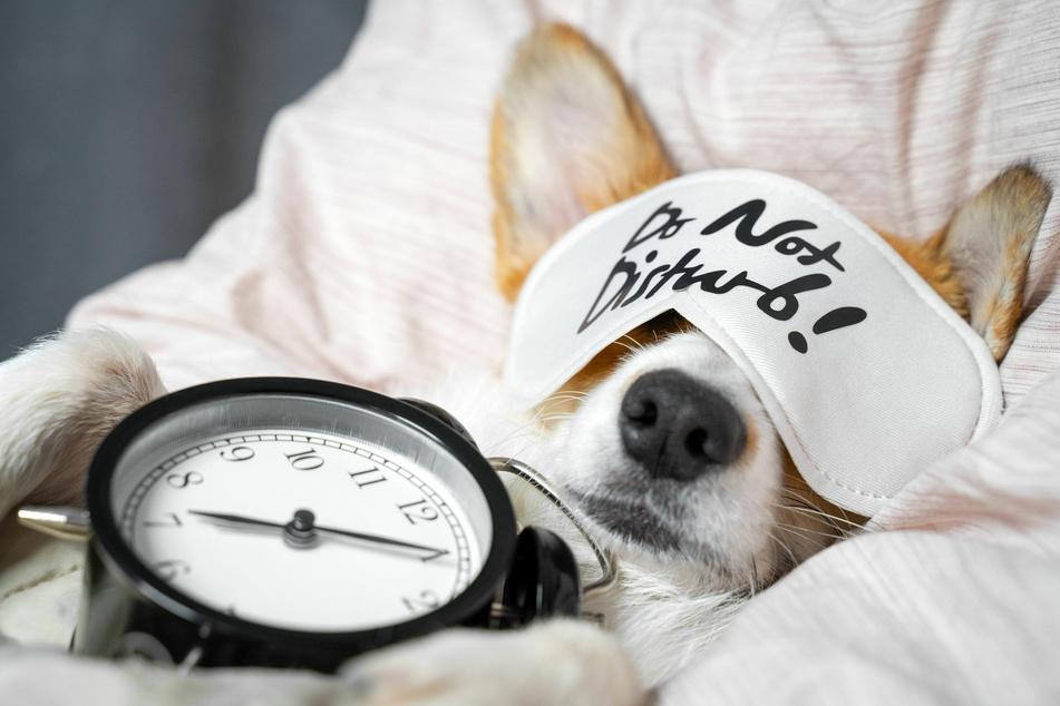 Hunde orientieren sich auch am Tagesablauf des Menschen.