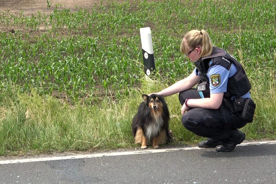 Auch ein Hund wurde gerettet und von den Einsatzkräften betreut.
