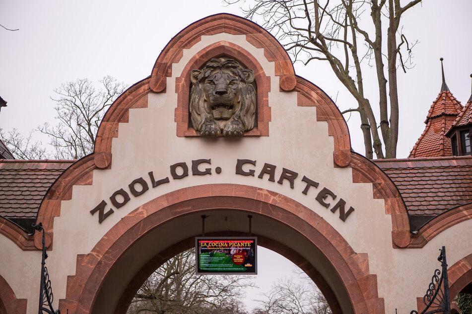 Der Zoo Leipzig soll die Löwenzucht einstellen, fordert PETA.