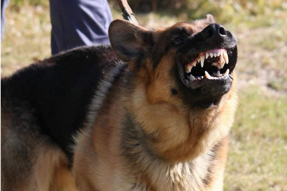 Taser nutzt nichts: Polizei tötet Schäferhund mit mehreren Schüssen