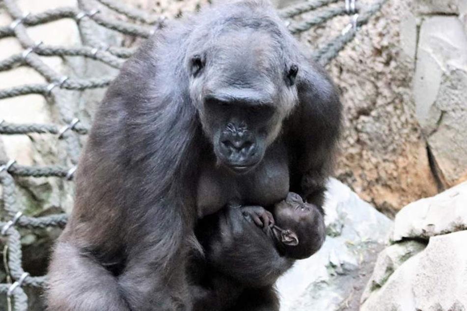 Mama Kumili und ihr Nikolaus-Baby im Pongoland.