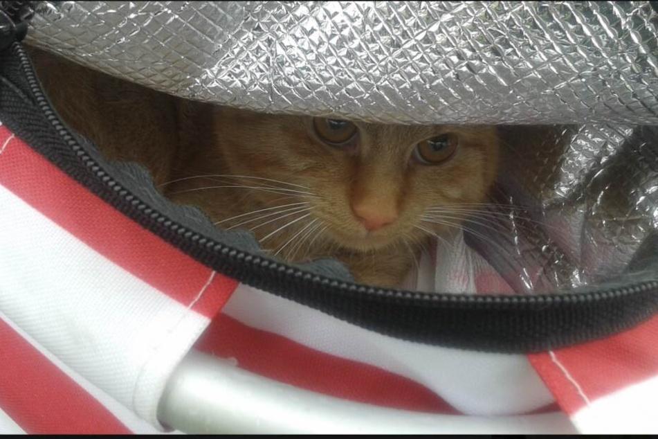 Herzlos! Tierhasser setzen Katze in Picknick-Korb aus