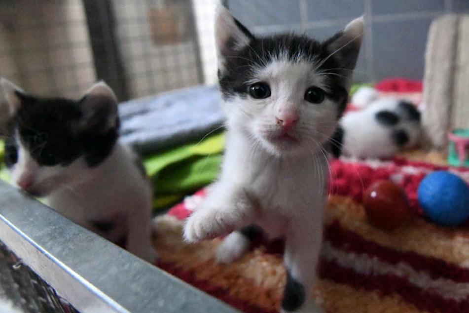 Vor allem zwischen Juni und August gibt es viel Katzennachwuchs.