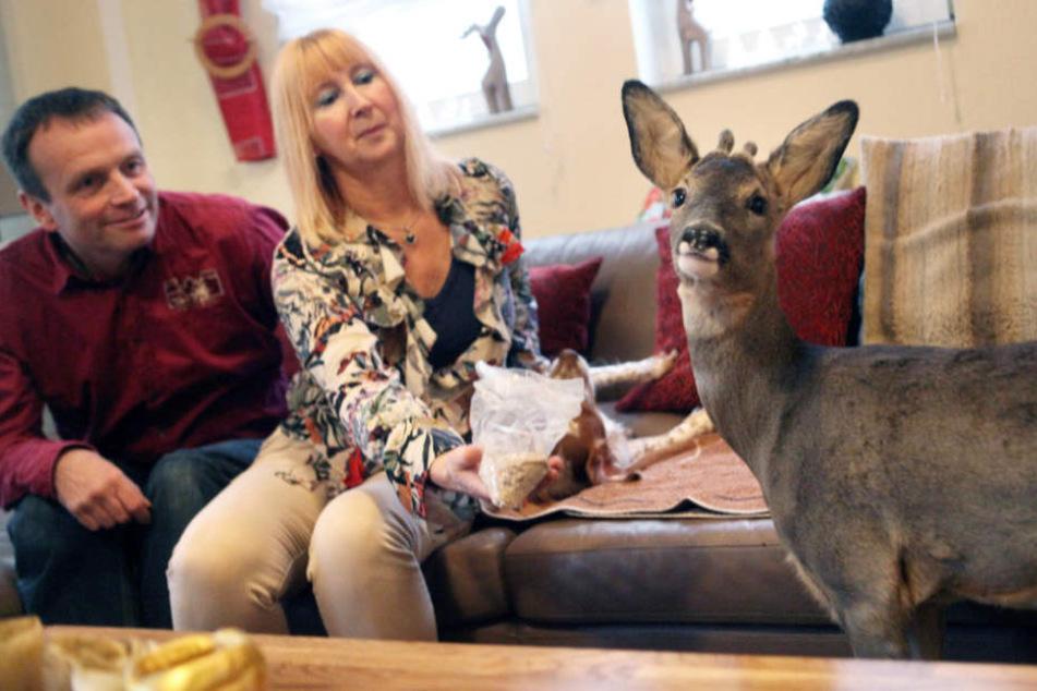 """Noch ein paar Monate darf """"Bambi"""" bei seinen Zieheltern bleiben."""