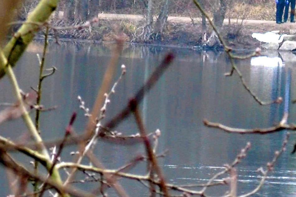 Im Schwielochsee bei Cottbus wurde die Leiche eines Mannes gefunden (Symbolbild).