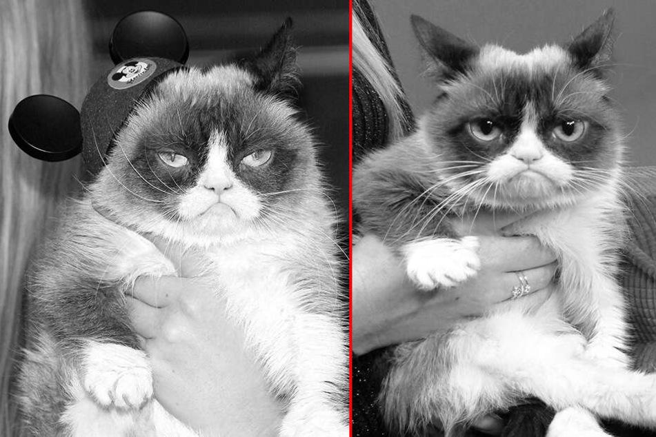 Das Gesicht, das Tausend Memes hervorbrachte: Grumpy Cat ist tot!