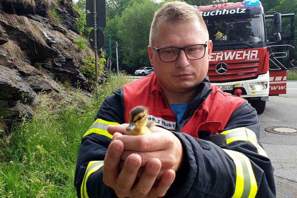 Geschafft: Die Feuerwehr rettete die Küken aus dem Gully.