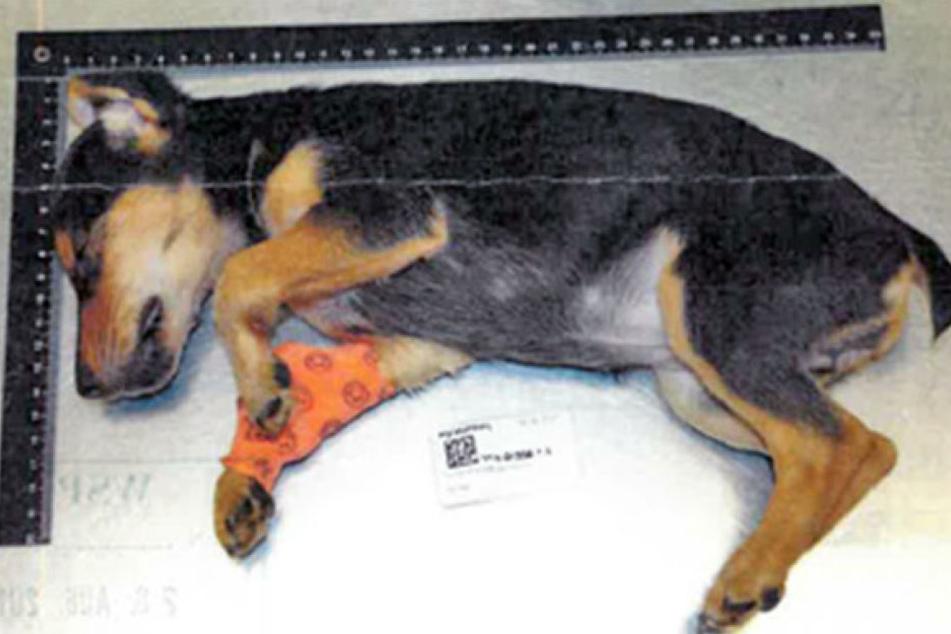 Die kleine Hündin verstarb aufgrund massiver Hirnverletzungen.