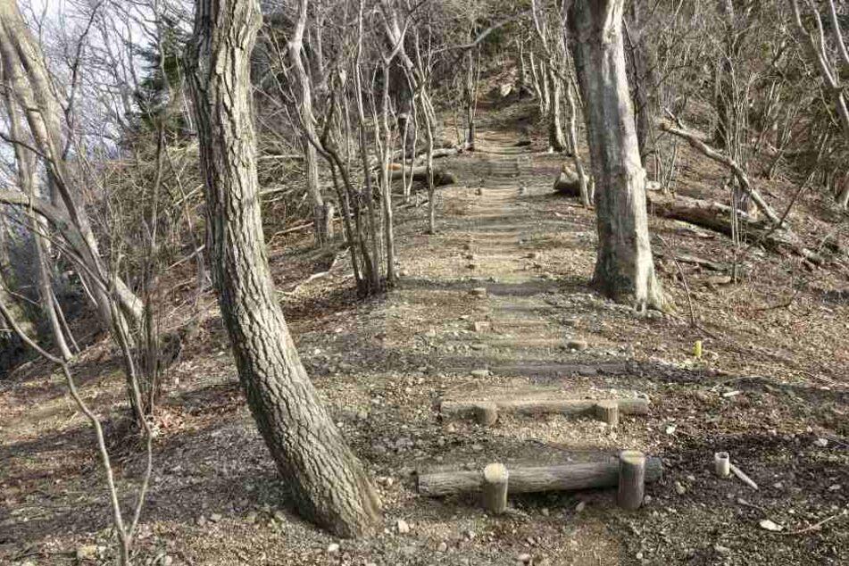 Am Samstag wurde in einem Wald bei Naumburg eine männliche Leiche entdeckt. (Symbolbild)