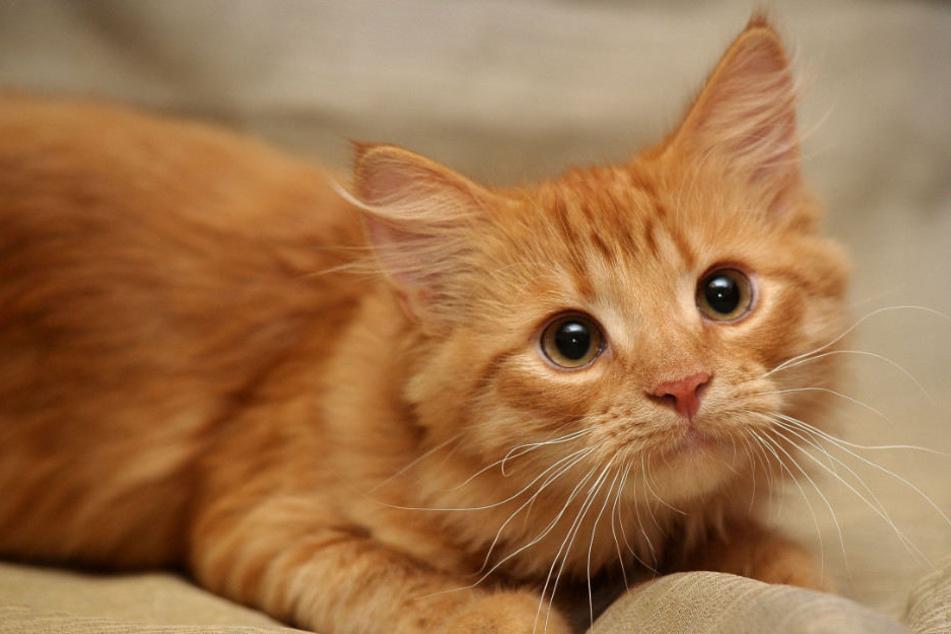 Eine Katze hat mit ihren nächtlichen Geräuschen einen Nachbar ziemlich genervt. (Symbolbild)