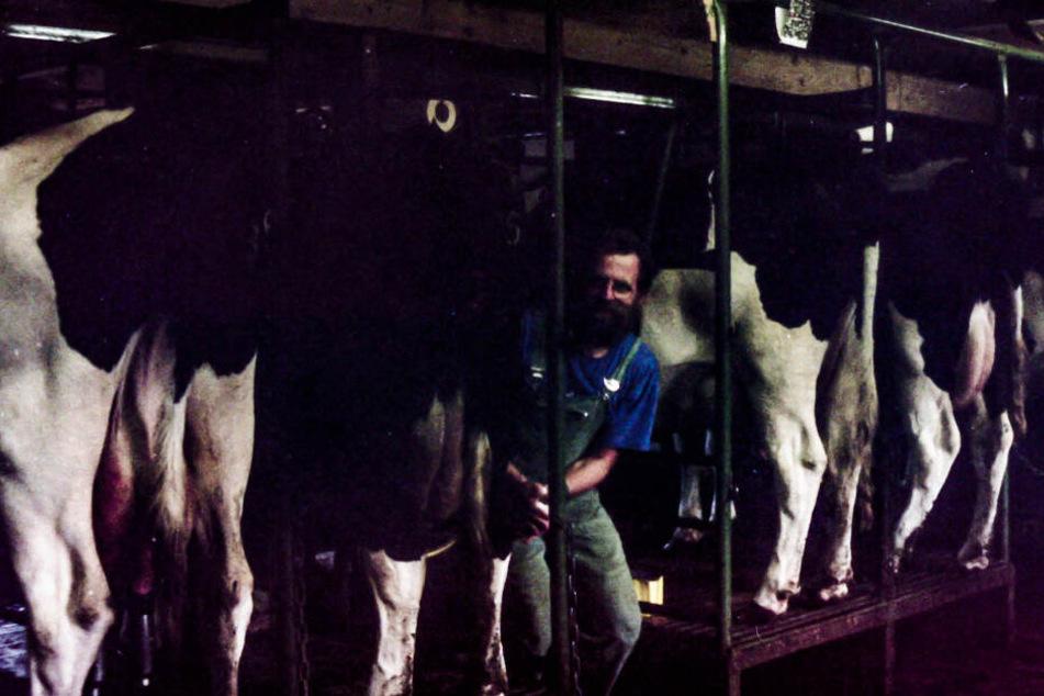 So sah es in den 1980er Jahren im Kuhstall des Hofes aus: Die Kühe wurden im wahrsten Sinne des Wortes eingepfercht.