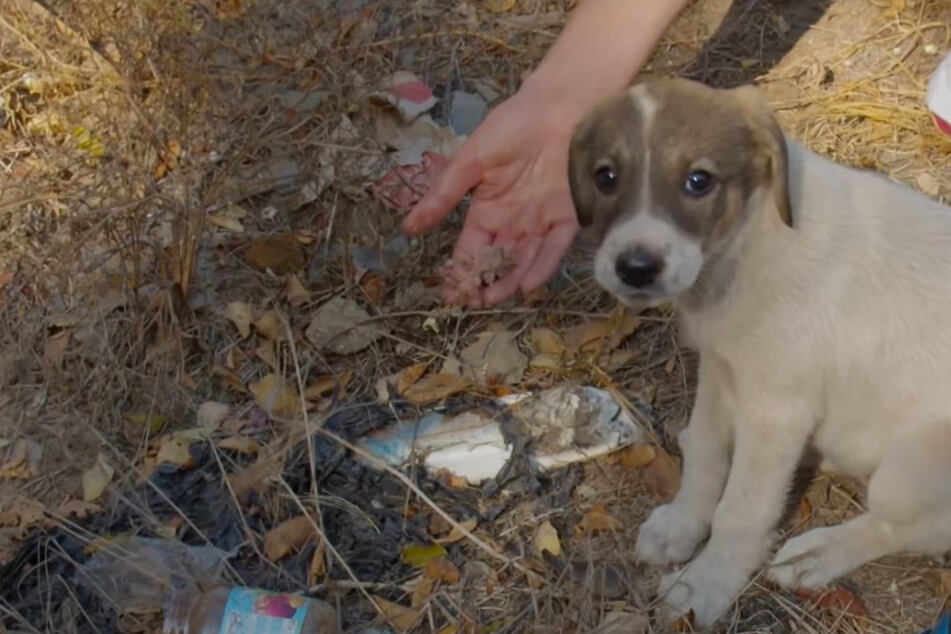 Puppy dumped in a landfill like trash rescued just in time