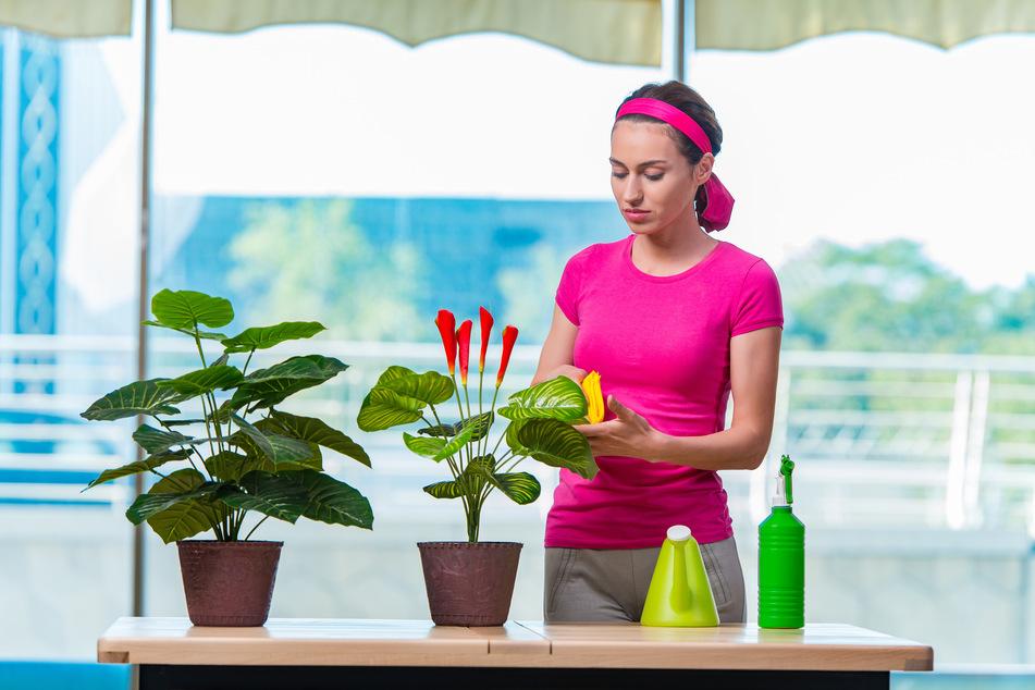 So macht ihr Eure Zimmerpflanzen winterfest