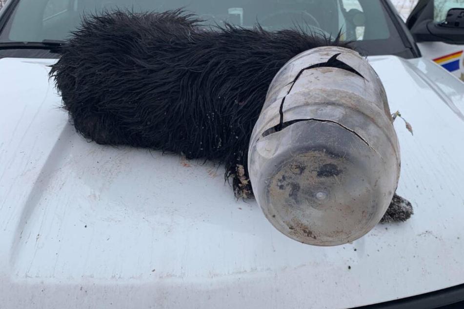 Hund mit festgefrorenem Krug überm Kopf gefunden
