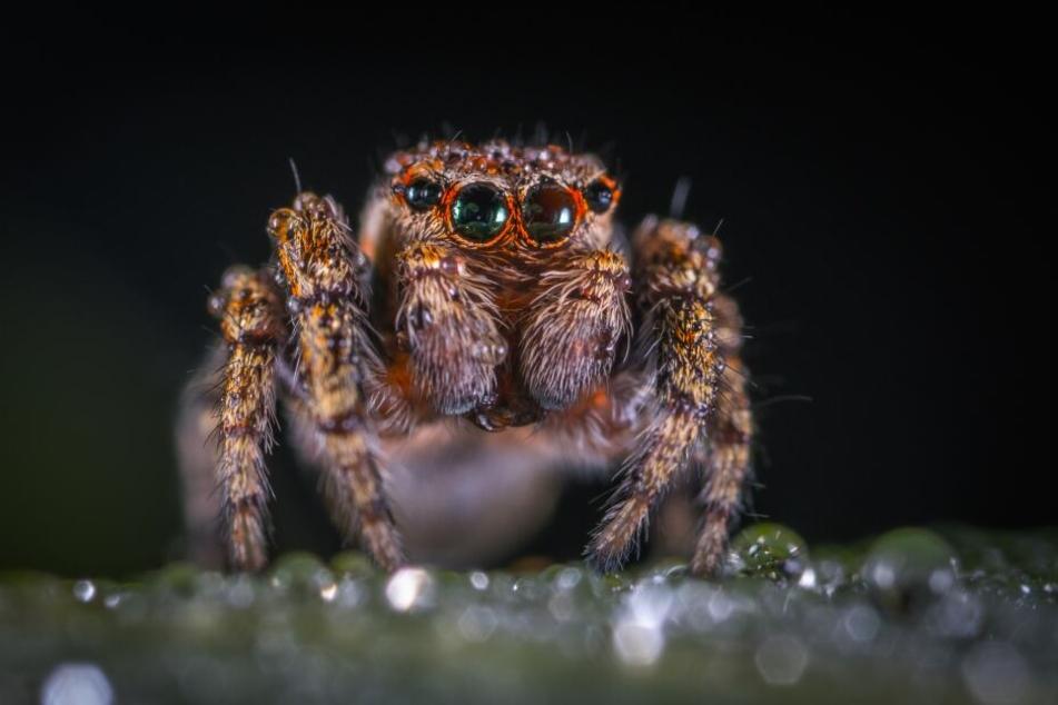 Giftigste Spinne Deutschland