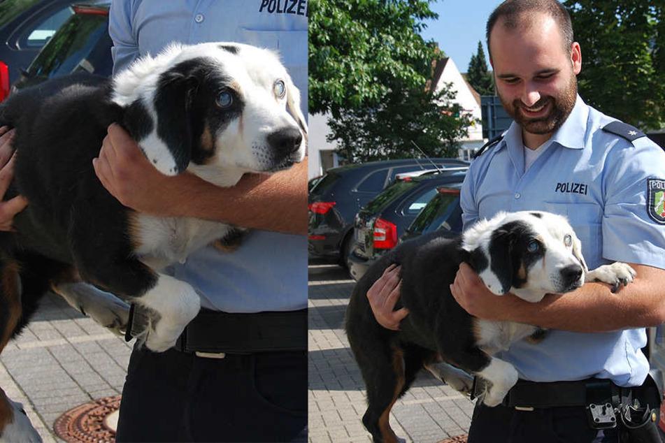 Polizeikommissar Sven Clausing mit dem blinden Hund.