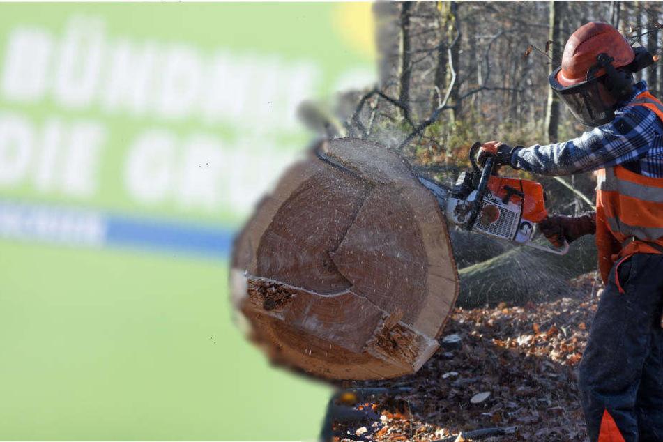 RWE plant, ab Oktober mehr als die Hälfte des Restbestands der Bäume im Hambacher Wald abzuholzen.