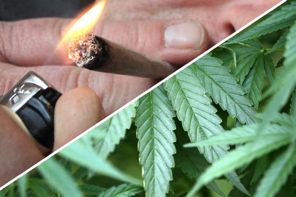 """Opa züchtet Cannabis: Polizei beweist """"guten Riecher"""""""
