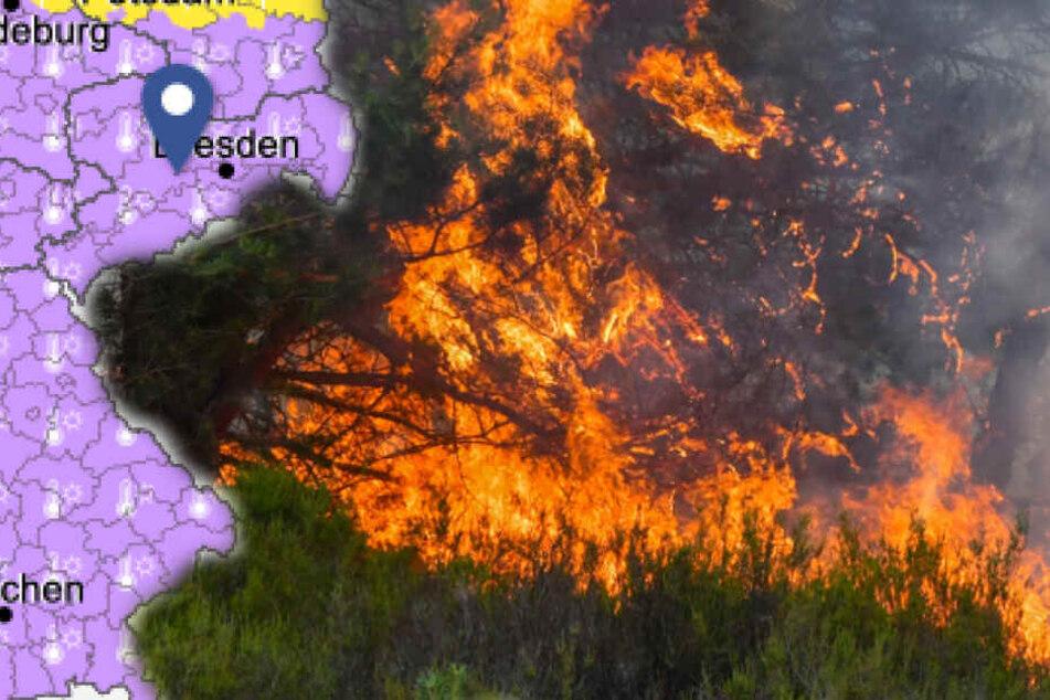 Waldbrandgefahr steigt: Höchste Warnstufe in Nordsachsen erreicht