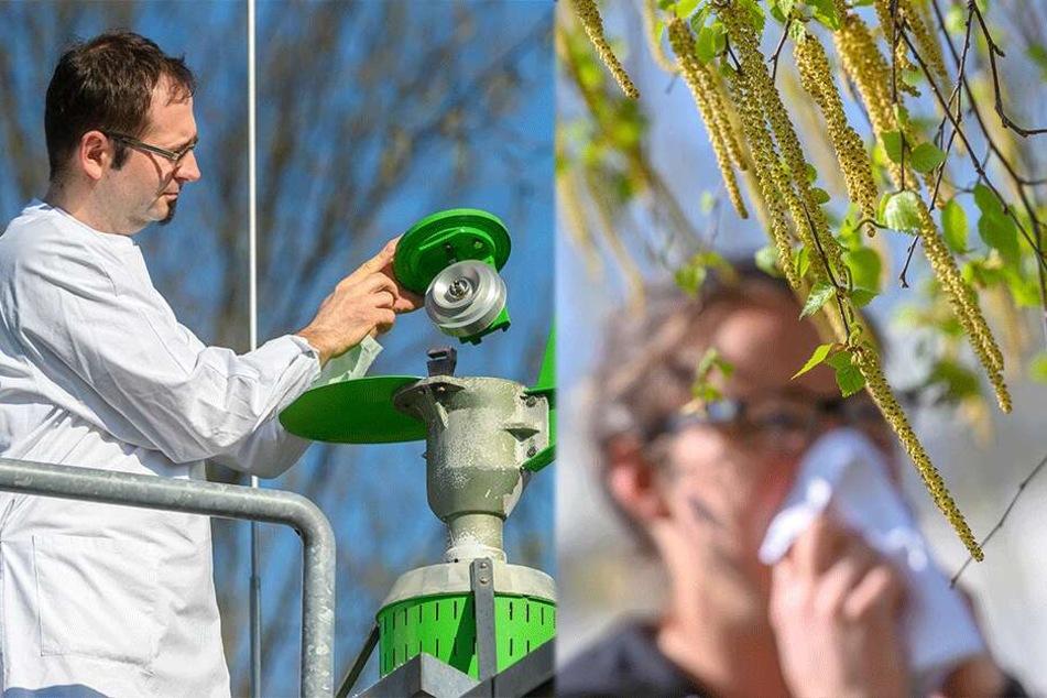 Birkenpollen haben Sachsen im Griff: Spitzen-Belastung quält Allergiker