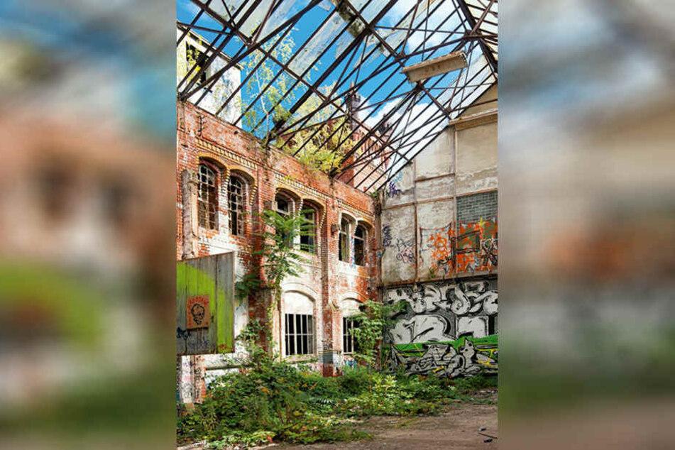 In dieser Leipziger Fabrikhalle wurden einst Buchdruckmaschinen und Lithographie-Pressen gefertigt. Heute hat die Natur die Überreste des Werks in Besitz genommen.