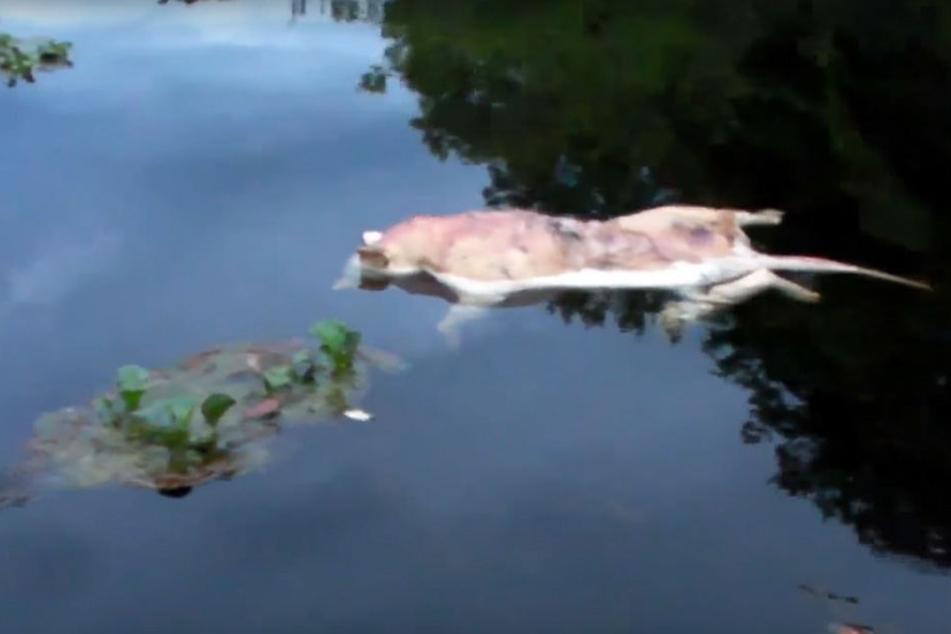 Das merkwürdige Wesen wurde in einem See entdeckt.