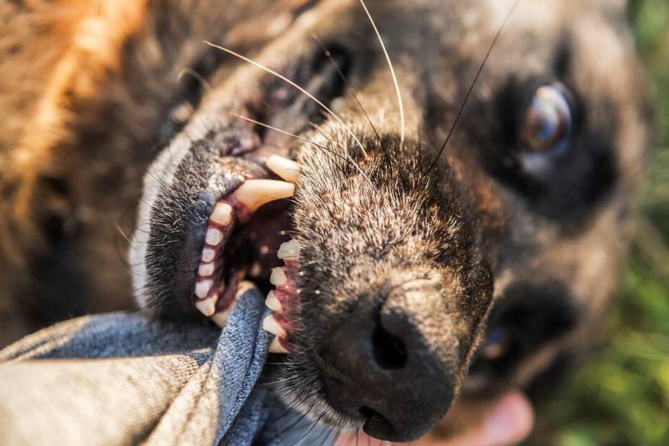 Hund verbeißt sich in anderem Tier, dann eskaliert der Streit der Besitzer