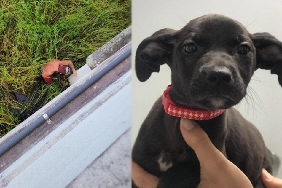 Man throws a puppy off a bridge, but no one could have predicted what happened next