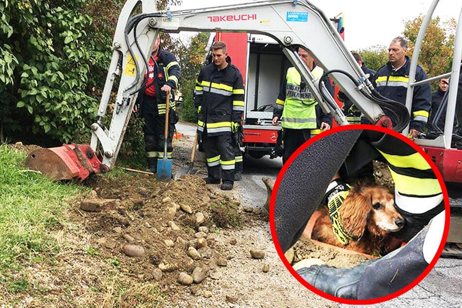 Hund hat sich verirrt: Feuerwehr muss Vierbeiner mit Bagger befreien!