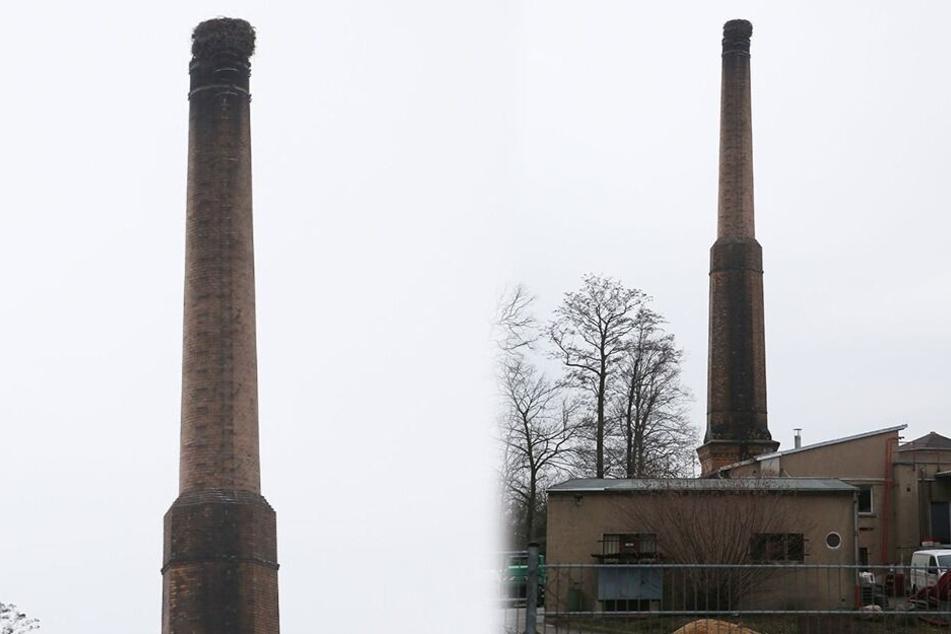 Der alte Schornstein am Gründelpark ist wieder bewohnt.
