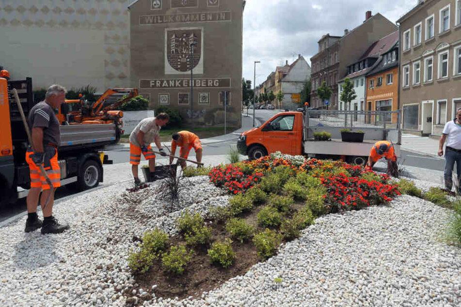Die Bepflanzung am neuen Kreisverkehr in der Schloßstraße Frankenberg erinnert manche an ein Hakenkreuz, manche an einen Propeller und wiederum andere an ein Dickichtmesser einer Motorsense. Egal, die Stadt hat reagiert und der Bauhhof setzt die Pflanzen.