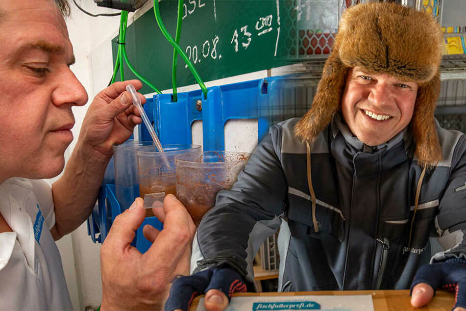 Aus Rinderherzen, Plankton und Garnelen: Erzgebirgs-Koch fertigt Schokolade für Fische