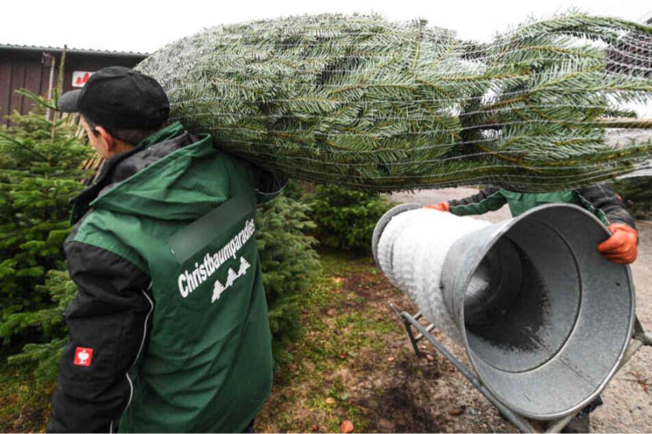 Nur an offiziellen Stellen solltet Ihr Euren Weihnachtsbaum kaufen.